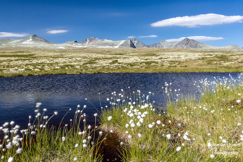 Cotton grass and lake at Rondane National Park, Norway - August