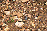Soil detail. Stony. Sand. Calcareous. Domaine Philippe Livera, Gevrey Chambertin, Cote de Nuits, d'Or, Burgundy, France