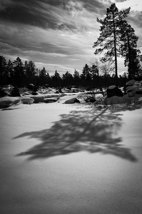 Tree shadow curving on snow. Northern Finland, Lapland, 2005 by Dave Walsh