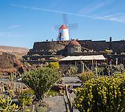 Cactus plants and windmill Jardin de Cactus designed by César Manrique, Guatiza, Lanzarote, Canary Islands, Spain.