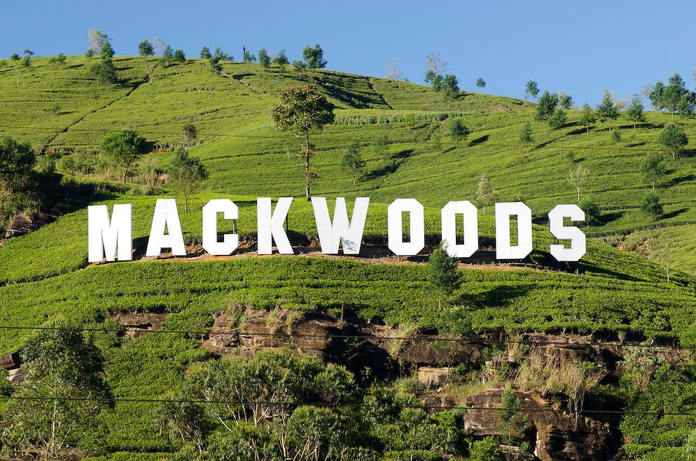 Mackwoods tea estate near Nuwara Eliya, Sri Lanka