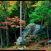 Fall color, Great Smoky Mountains National Park. 4x5 Kodak Ektar 100. photo by Nathan Lambrecht