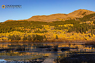 Autumn aspen trees reflect in pond near Marias Pass in the Lewis and Clark National Forest, Montana, USA