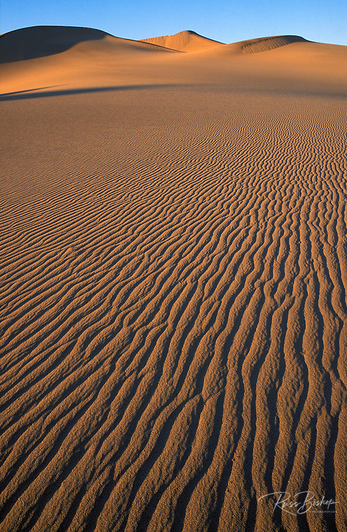 Evening light on the Mesquite Flat sand dunes, Death Valley National Park, California