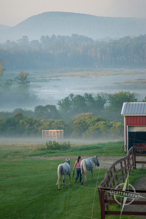 Early morning at Undermountain Farm, Lenox, MA.