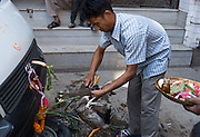 Auto care in Durbar Square, Kathmandu, Nepal: a man sacrifices a duck in hopes to ward off car problems in the coming year. Dasain Festival (or Durga Puja) is Nepal's biggest annual festival, a 15-day family affair with the biggest animal sacrifice of the year. Durga Puja celebrates the victory of the bloodthirsty goddess Durga over the forces of evil personified in the buffalo demon Mahisasura.  Outside of the city, country dwellers erect swings and makeshift ferris wheels.