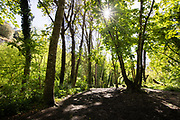 Sun shining through the trees in the middle of Rozel woods in the rural countryside of Jersey, CI