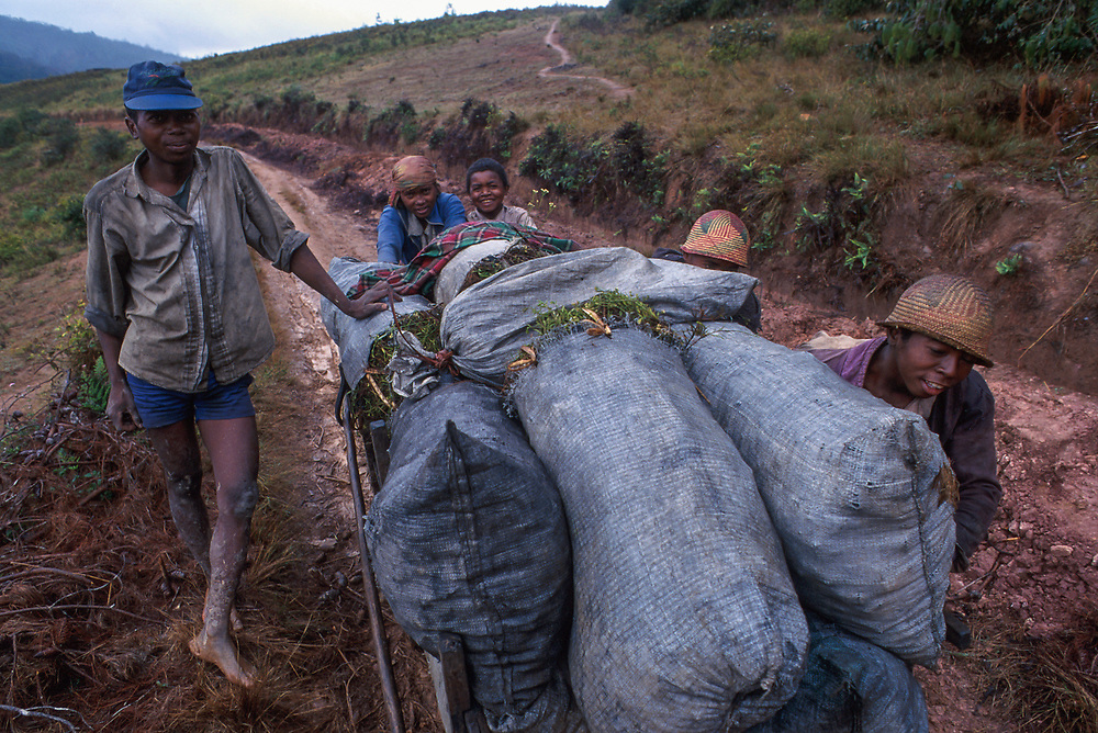 Poverty is rife in the Fianarantsua Highlands of Madagascar Hauling charcoal to be used as fuel.
