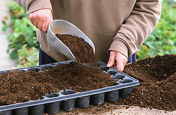 Sowing seed in modules<br /> Filling trays with compost