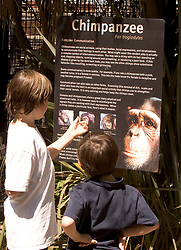 Young visitors bone up on their chimpanzee knowledge outside the primates' enclosure at the Oakland Zoo, Tuesday, Aug. 24, 2010 in Oakland, Calif. (D. Ross Cameron/Staff)