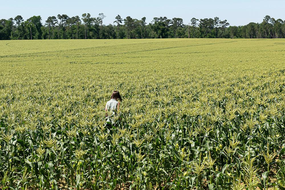 Casey Cox walks in a field of sweet corn in her farm in Camilla, Georgia.