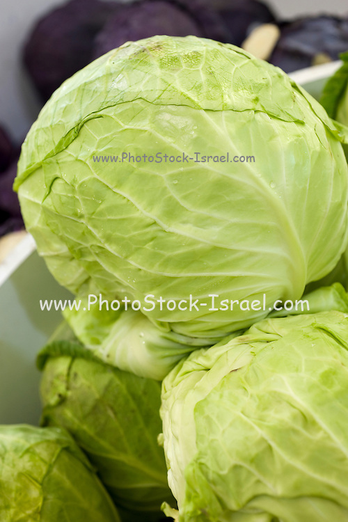A pile of fresh, ripe green cabbage (Brassica oleracea)