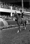 "09/08/1962<br /> 08/09/1962<br /> 09 August 1961<br /> RDS Horse Show, Ballsbridge Dublin, Thursday. <br /> Picture shows Ladies Hunter Champion of Show Parading in prize winners parade in Enclosure of RDS, ""Enchanted"" owned and ridden by Mrs David Price, Kilmokea, Campile, Co. Wexford."
