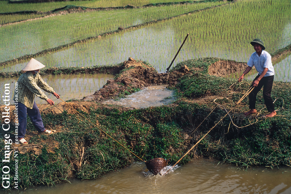 Farmers perform irrigation for the rice paddies by hand, one basketful at a time in Van Lung Village in Phu Tho, Vietnam.