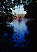 Couple paddling through red mangrove tunnel, Turner River, Everglades National Park, Florida.