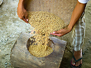Farmer Gary Castanares prepares to hand mill SRI rice at home in Daguma village, Bagaubayan, Sultan Kudarat province, Mindanao Island, The Philippines. Gary attended Oxfam's field school where he learnt about SRI (System of Rice Intensification) farming. Hand milling rice retains all of the vitamins and minerals and tastes better but it is very labour intensive.