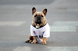 A England supporting dog outside the ground prior to the 2018 FIFA World Cup Qualifying, Group F match at Wembley Stadium, London.