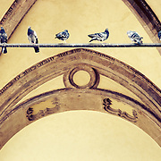 Pigeons perched on a bar in an alcove next to Piazza del Duomo in Florence, Italy.