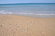 Israel. Haifa, Dado Beach, seashells on the beach