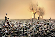 An entangled expanse of chopped stalks and debris: this is how the crop fields in the plain near to Castagnole in Piedmont, Italy look like in winter..The texture of the frozen field is the perfect foreground to conveys the feeling of an extremely cold morning of December. And the yellow tint in the sky and its beautiful glow coming from the sunlight diffused by the fog adds a strange, unusual richness to the winter desolation.