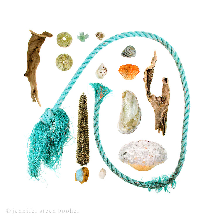 I like the calligraphic sweep of fishing ropes and the patina that algae give to the gaudy shades. <br /> <br /> Driftwood, Green Sea Urchins (Strongylocentrotus drobachiensis), nylon fishing rope, shotgun shell, Northern Rock Barnacle (Balanus balanoides), corncob, bit of fishing buoy, Waved Whelk (Buccinum undatum), Dog Whelk (Nucella lapillus), stone, Green Crab (Carcinus maenas), Blue Mussel (Mytilus edulis), Rock Crab (Cancer irroratus).