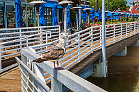 Seagull @ Coronado Ferry Landing