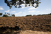 Ploughed field framed by tree branches, Sutton, Suffolk, England