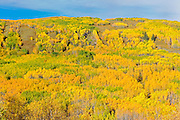 Autumn colors along the valley surrounding the Peace River<br /> Dunvegan<br /> Alberta<br /> Canada