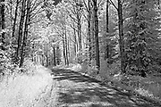 Road in forest <br />Nestor Falls<br />Ontario<br />Canada