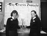 11/01/1985.01/11/1985.11th January 1985.The Aer Lingus Young Scientist Exhibition at the RDS Dublin..Marina O'Flaherty (left) and Ursula Duffy, both from Ursuline Convent, Finisklin, Co. Sligo, were winners of one of the E.E.C prizes for their project 'A Biological Study of Holly Bushes'.