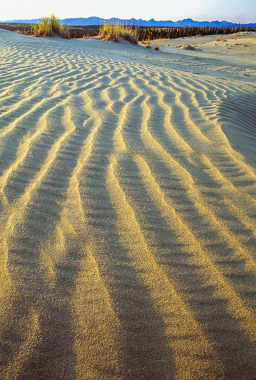 Kobuk Dunes Wilderness, afternoon light, September, Kobuk Valley National Park, Alaska, USA