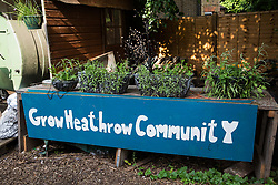 Sipson, UK. 5th June, 2018. Plants growing at Grow Heathrow. Grow Heathrow is a squatted off-grid eco-community garden founded in 2010 on a previously derelict site close to Heathrow airport to rally support against government plans for a third runway and it has since made a significant educational and spiritual contribution to life in the Heathrow villages, which remain threatened by Heathrow airport expansion.