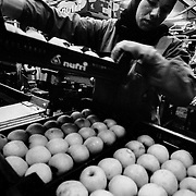 The agricultural industry in Catalonia accounts for 30% of the whole of the Spanish market. Day labourers from Morocco, Latin America and Sub-Saharan Africa allow this sector to remain competitive in the international markets. Spain.