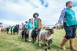 Desfile dos campeões durante a Inauguração oficial 38ª Expointer, que ocorre entre 29 de agosto e 06 de setembro de 2015 no Parque de Exposições Assis Brasil, em Esteio. FOTO: Vilmar da Rosa/ Agência Preview