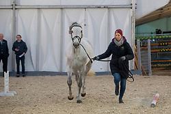Philippaerts Olivier, BEL, H&M Legend Of Love<br /> Jumping Mechelen 2018<br /> © Hippo Foto - Sharon Vandeput<br /> 27/12/18