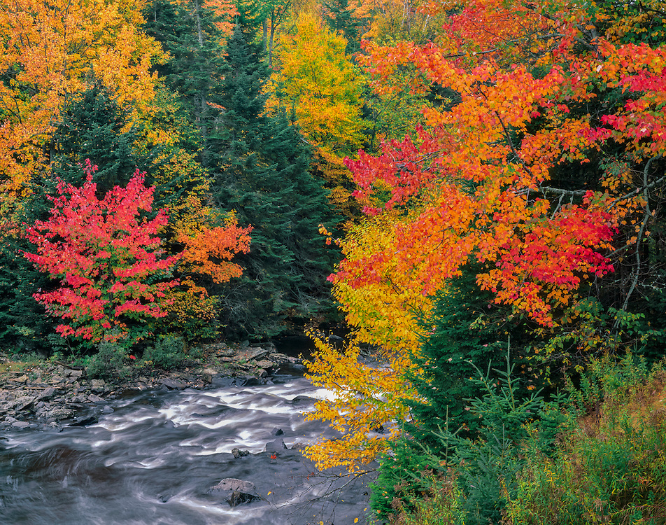 Rapids on Connecticut River in fall, mixed hardwood & evergreen forest, Pittsburg, NH