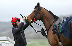 Racehorse Due Reward is fed ahead of the racing at St Patrick's Thursday of the 2019 Cheltenham Festival at Cheltenham Racecourse.
