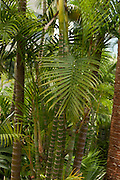 A Hong Kong palm Oasis located on the rooftop.