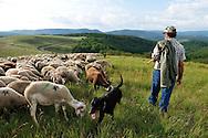 Elevage de moutons. Jean Claude Boisson, berger de transhumance au lac des Pises.