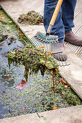 Removing leaves and pond weed from a pond with a rake