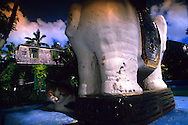 "USA, Vereinigte Staaten Von Amerika: Hauskatze (Felis catus domesticus), Felidae, ?Marchary Canon Rollings? ruht im Schatten einer indischen Elefantenskulptur am Pool, Hemingway Haus und Museum, Key West, Florida | USA, United States Of America: Domestic cat (Felis catus domesticus), Felidae, ""Marchary Canon Rollings"" resting in the shade of a indian elephant sculpture at the swimming pool, Hemingway Home and Museum, Key West, Florida |"
