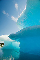 Icebergs on Bear Lake, Kenai Fjords National Park; Alaska