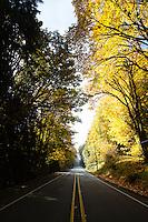 Fall color along Hwy 101. Hood Canal, Olympic Peninsula, WA