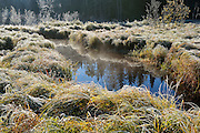 Frost on marsh<br /> Whiteshell Provincial Park<br /> Manitoba<br /> Canada