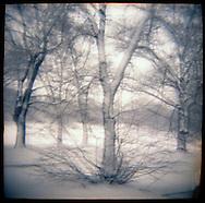 Winter in Prospect Park, Brooklyn.