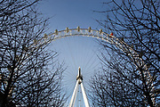 Looking up at The London Eye throughthe branches of trees. The London Eye is a giant Ferris wheel on the South Bank of the River Thames in London, England. Also known as the Millennium Wheel, it is a huge draw for tourism. London, UK.