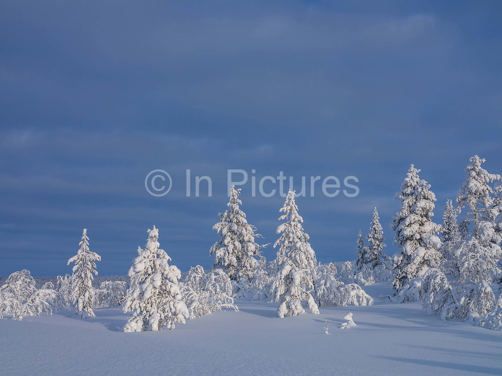 View of the snowy Winter landscape and trees on 19th February 2020 in Finnish Lapland. The natural features and landscape of the fells have always enchanted hikers and the area offers magnificent fells and seemingly endless woodlands.