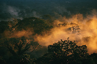 View of the rain forest canopy with sunset lighting up the mist.  This forest is home to the orangutans of Gunung Palung National Park, Borneo, Indonesia.
