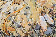 Rocks, sand and seaweed on Agate Beach.  Naikoon Provincial Park. Graham Island. , Haida Gwaii (formerly the Queen Charlotte Islands), British Columbia, Canada