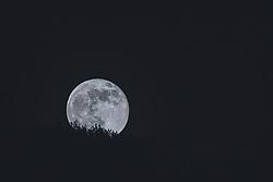 THEMENBILD - der Vollmond im April geht hinter Bäumen auf, aufgenommen am 27. April 2021, Kaprun, Österreich // on 2021/04/27, Kaprun, Austria. EXPA Pictures © 2021, PhotoCredit: EXPA/ Stefanie Oberhauser